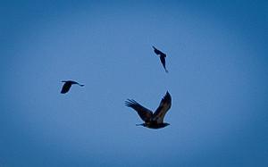 photo credit: Greenwood Lake/Cementery via photopin (license)